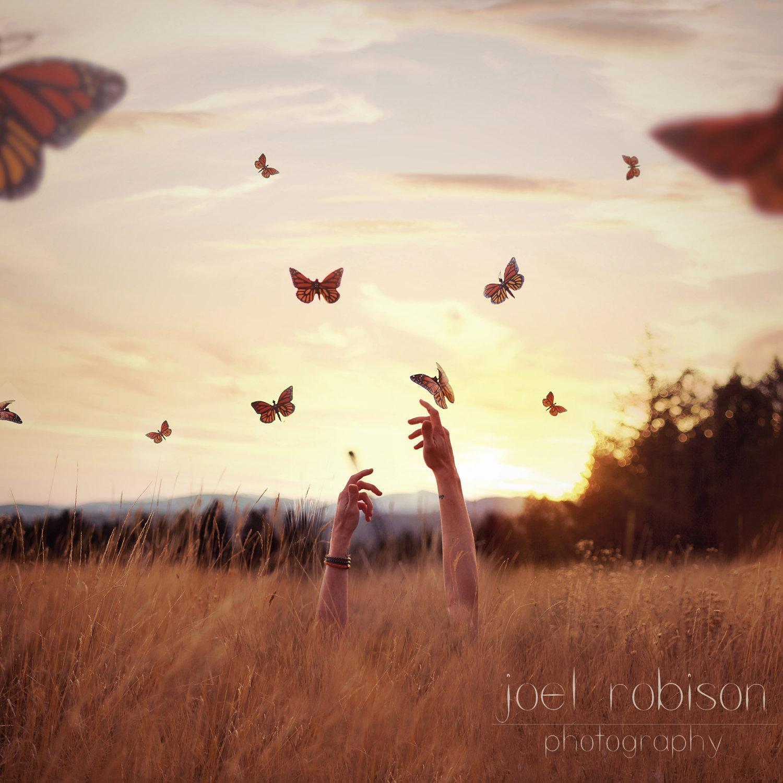 joel-robinson-butterfly-field
