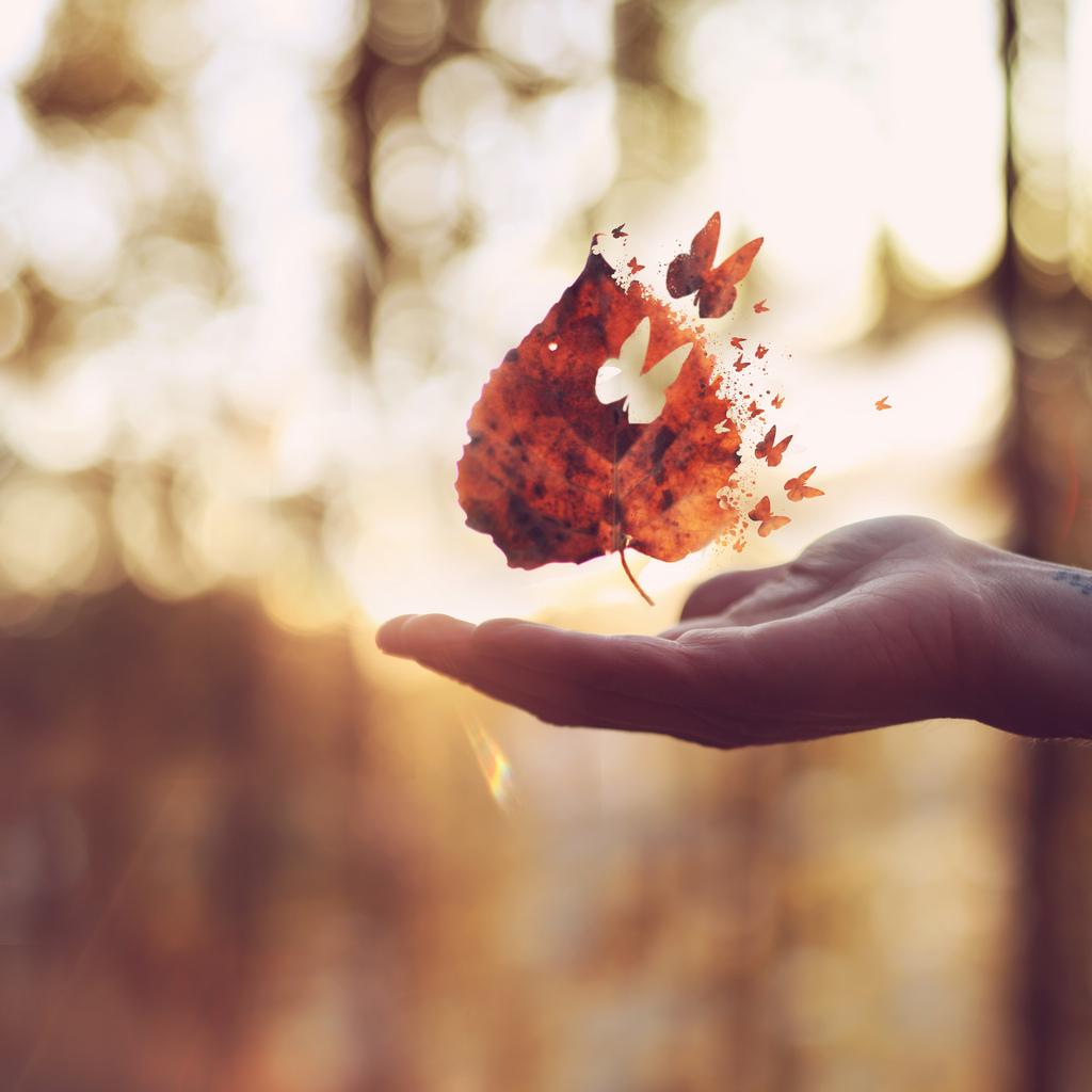 joel-robinson-butterfly-leaf
