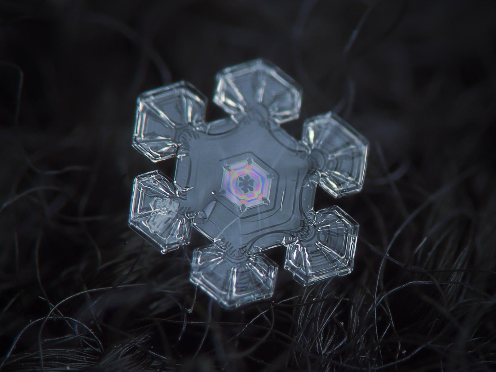 magnified-snowflakes-alexey-kljatov-04