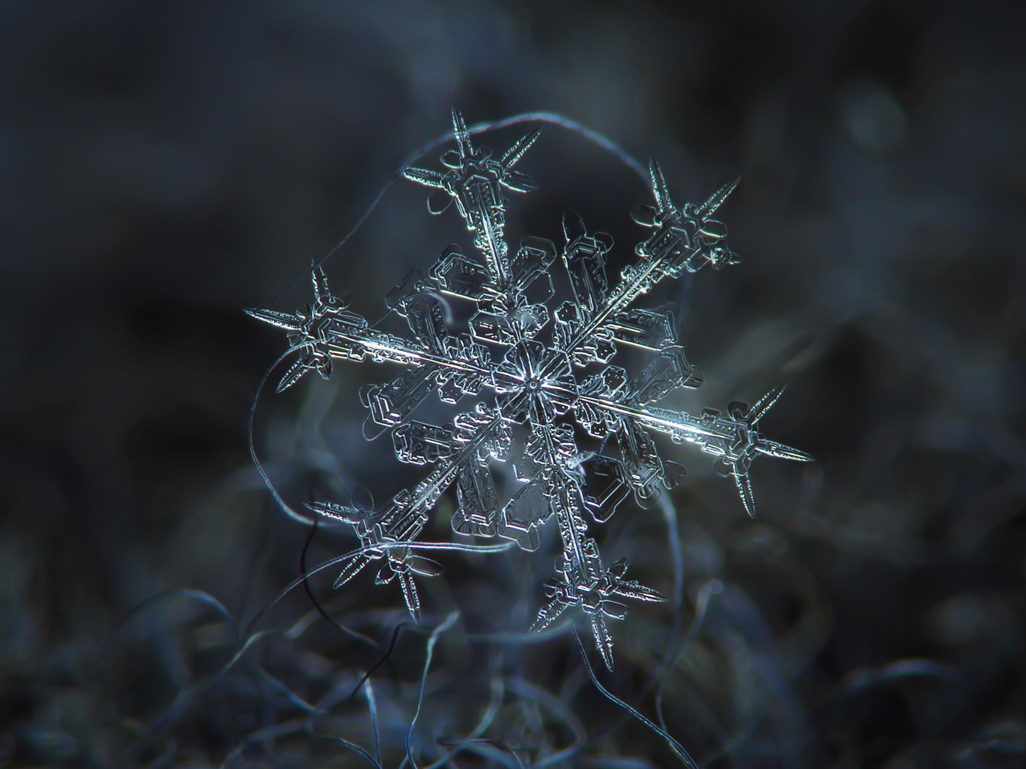 magnified-snowflakes-alexey-kljatov-12