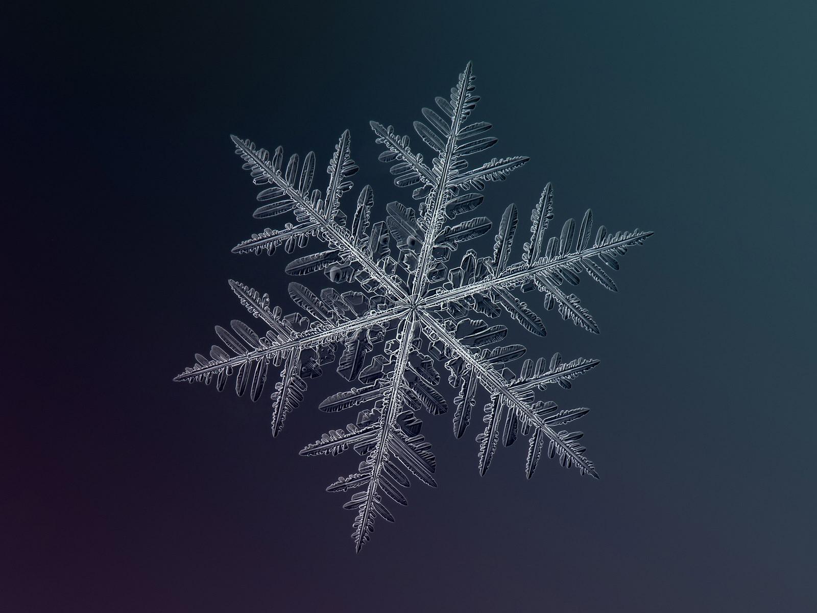 magnified-snowflakes-alexey-kljatov-13