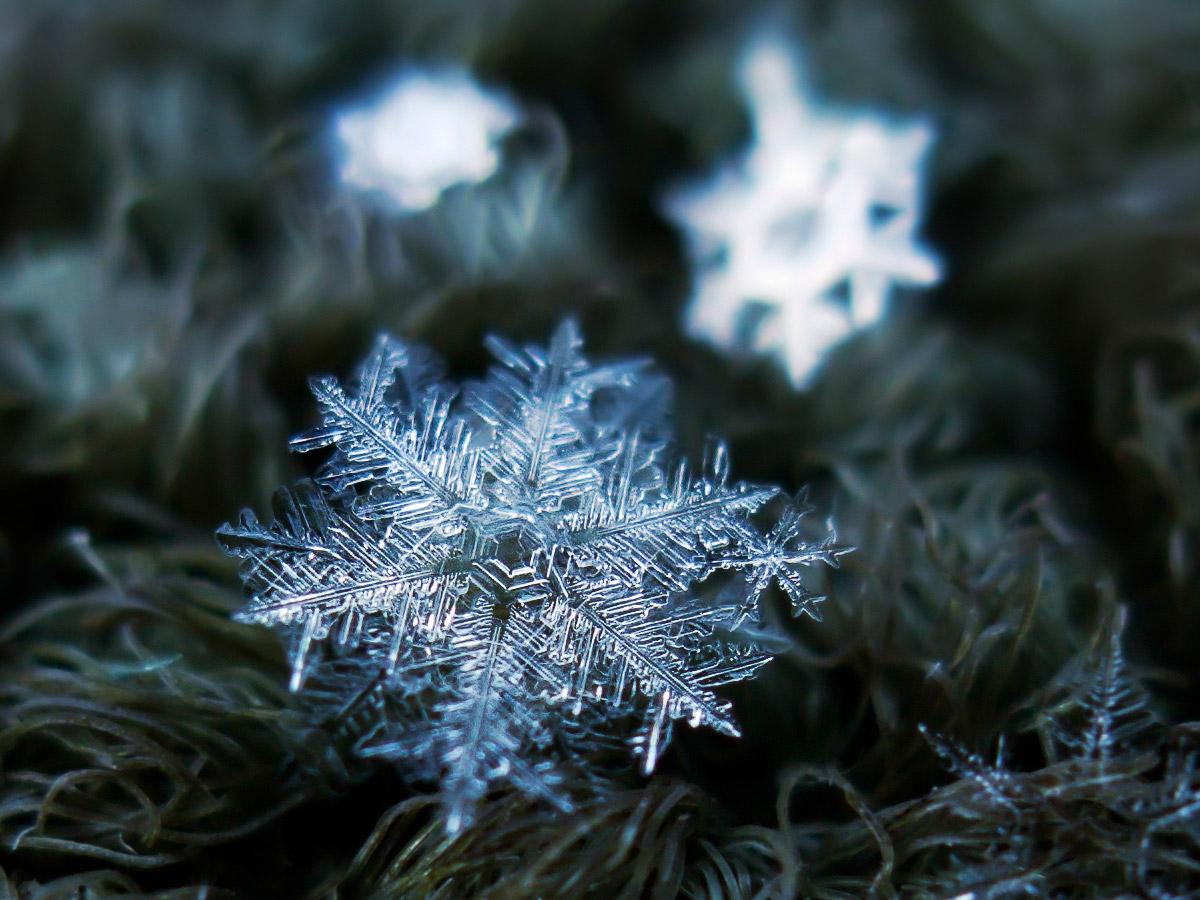 magnified-snowflakes-alexey-kljatov-15