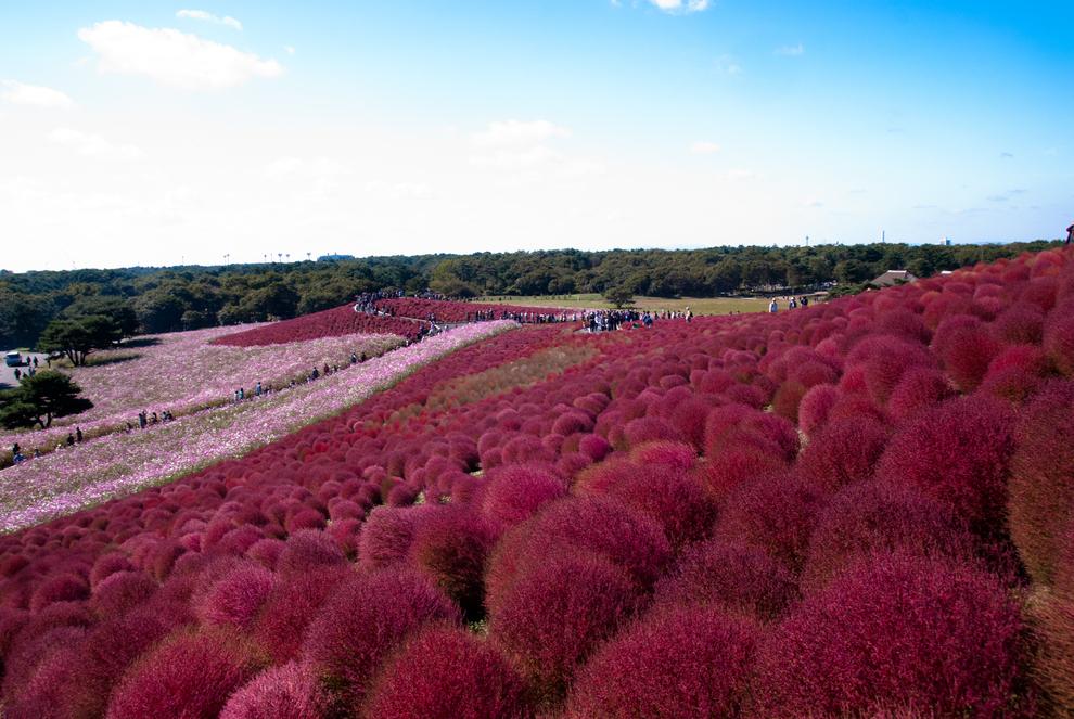 surreal-places-hitachinaka-japan