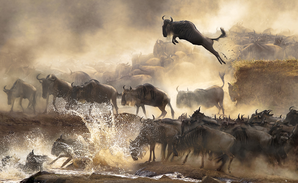2014-sony-world-photography-awards-12