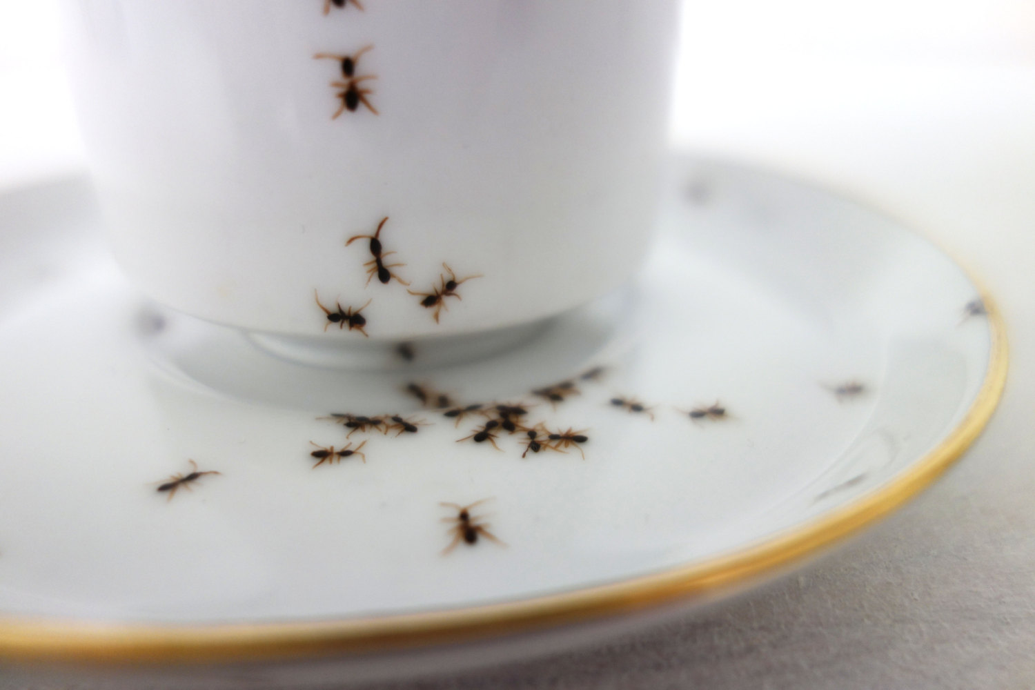 ants-on-porcelain-evelyn-bracklow-03