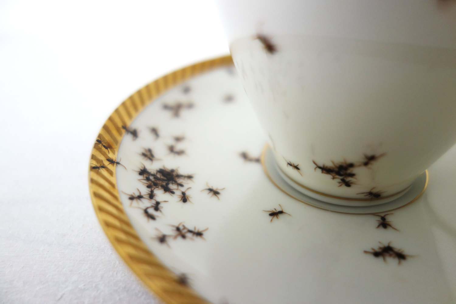 ants-on-porcelain-evelyn-bracklow-04