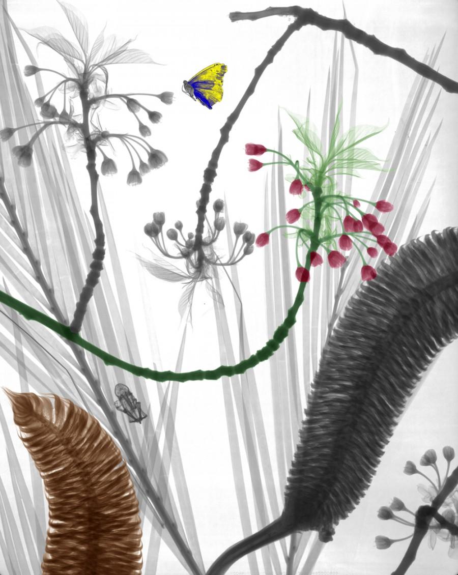 biorama-arie-vant-riet-02