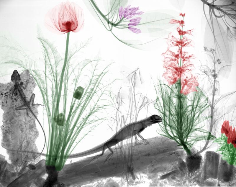 biorama-arie-vant-riet-07