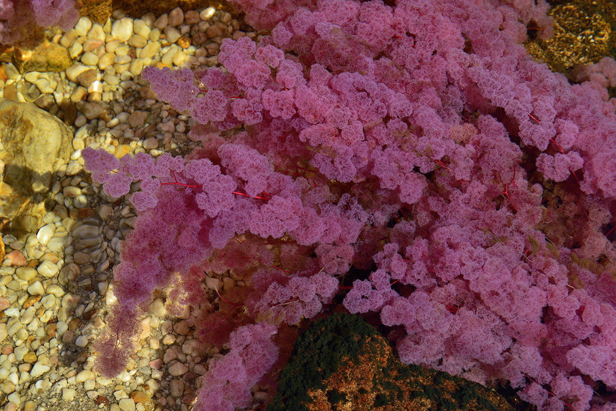 cano-cristales-liquid-rainbow-olivier-grunewald-06