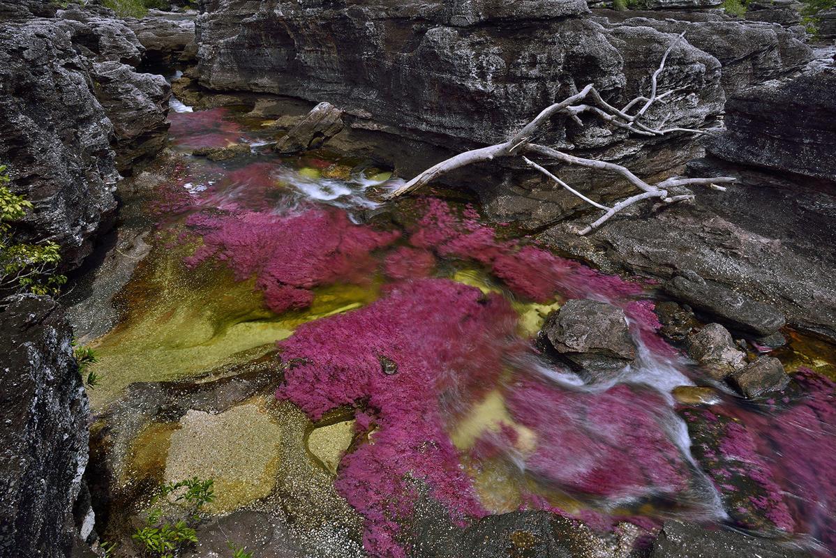 cano-cristales-liquid-rainbow-olivier-grunewald-11