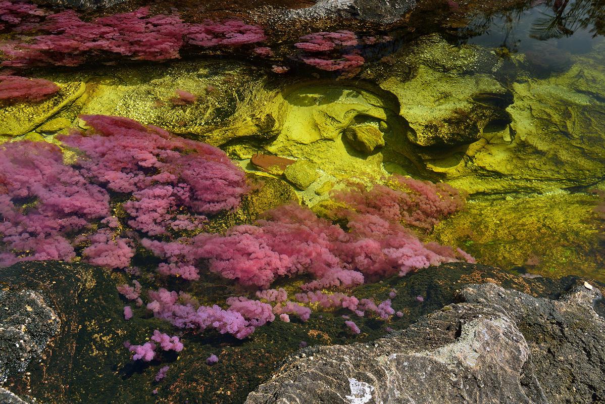 cano-cristales-liquid-rainbow-olivier-grunewald-18