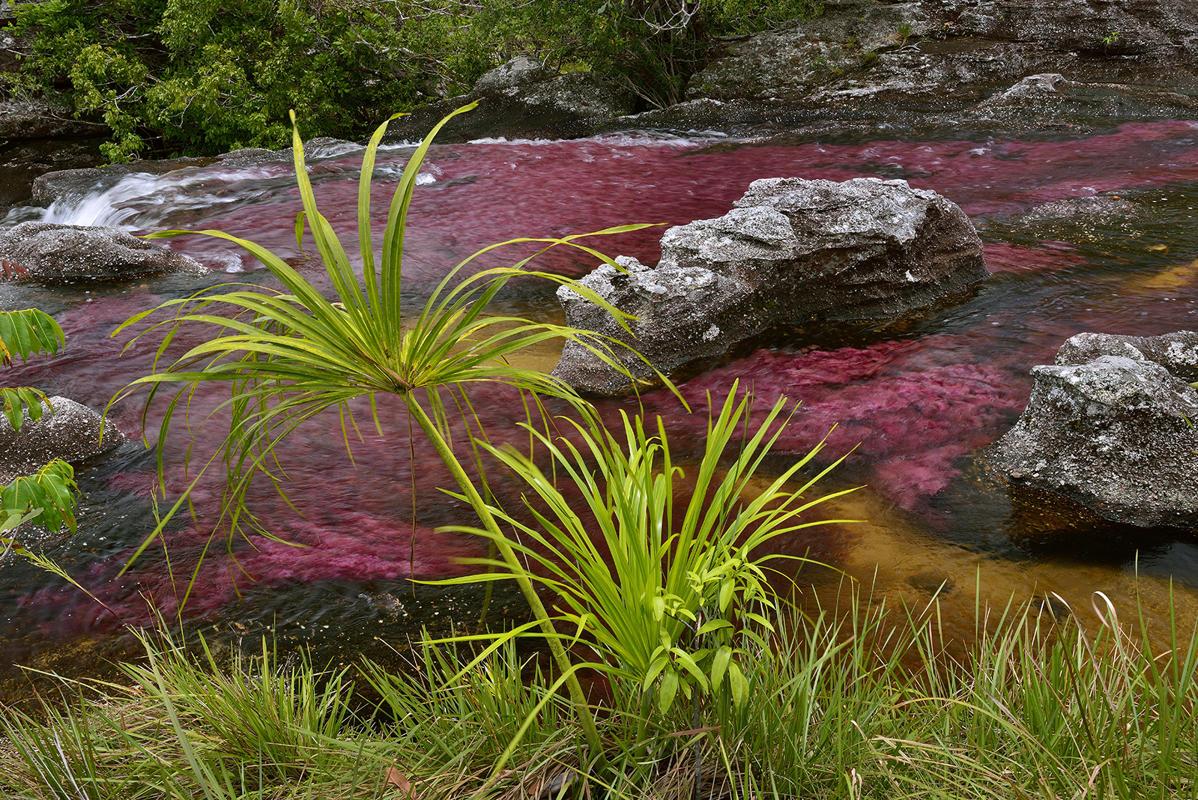 cano-cristales-liquid-rainbow-olivier-grunewald-26