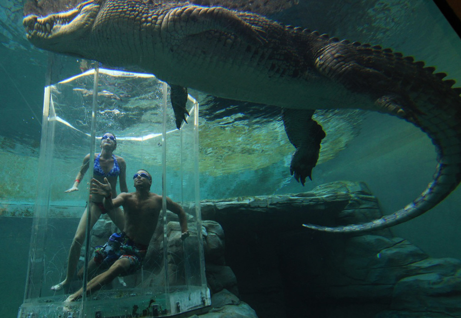 crocosaurus-cove--cage-of-death-02