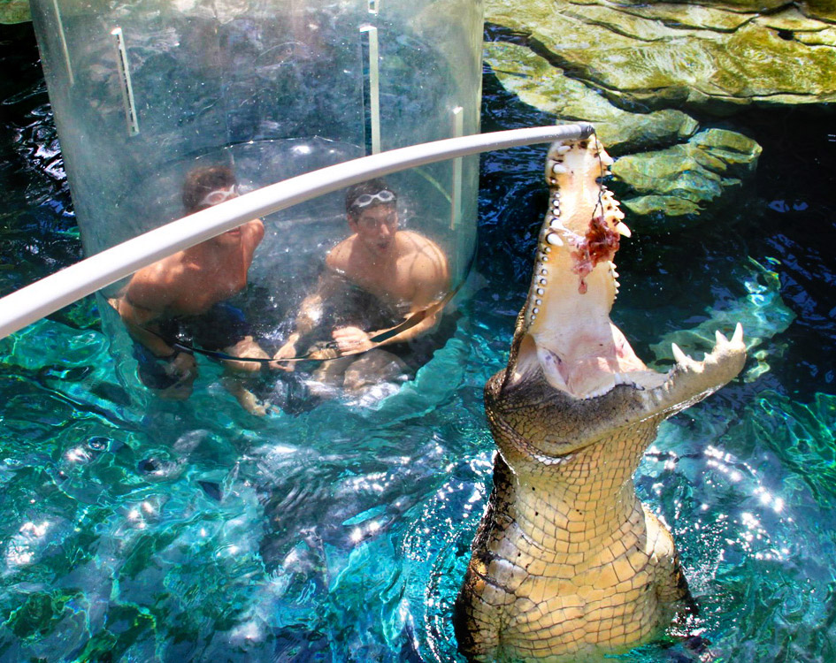 crocosaurus-cove--cage-of-death-05