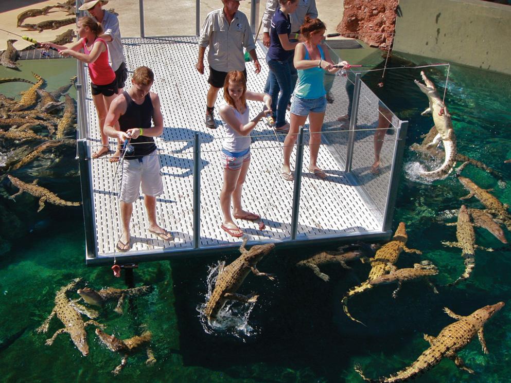 crocosaurus-cove--cage-of-death-06