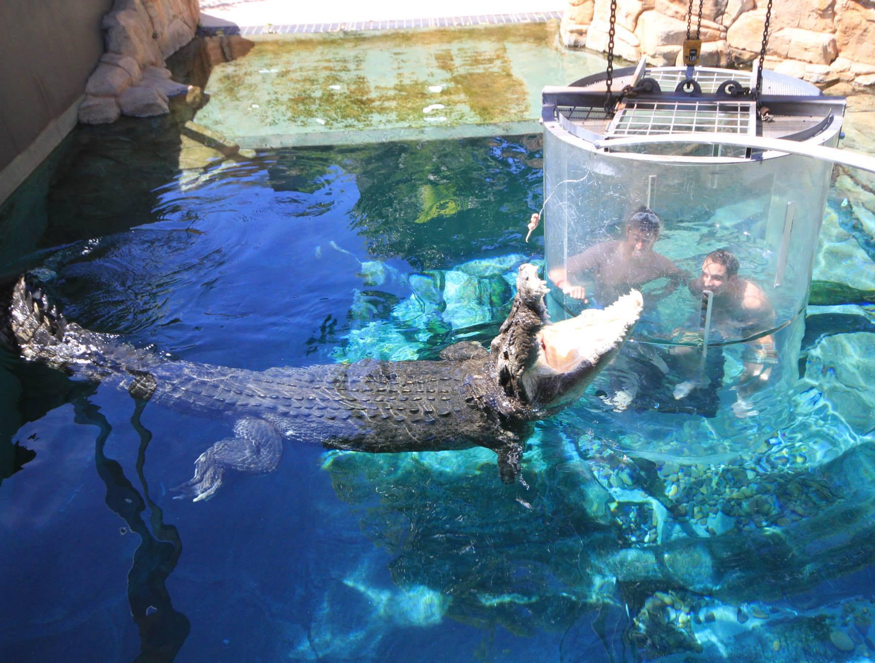crocosaurus-cove--cage-of-death-07