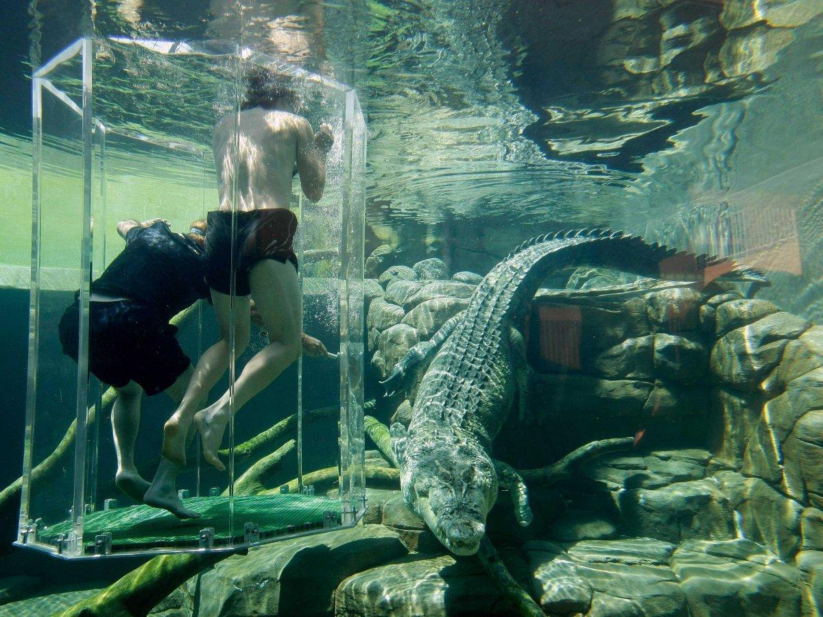 crocosaurus-cove--cage-of-death-09