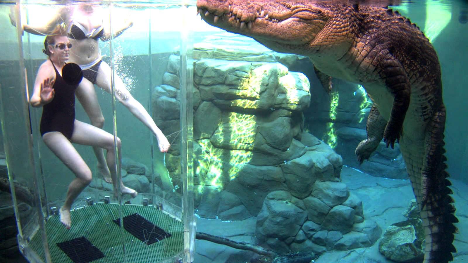 crocosaurus-cove--cage-of-death-10