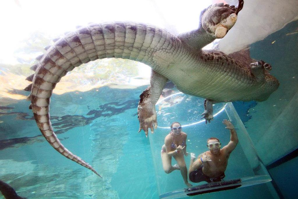 crocosaurus-cove--cage-of-death-11