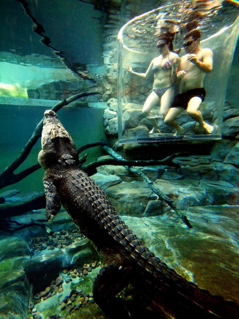 crocosaurus-cove--cage-of-death-14