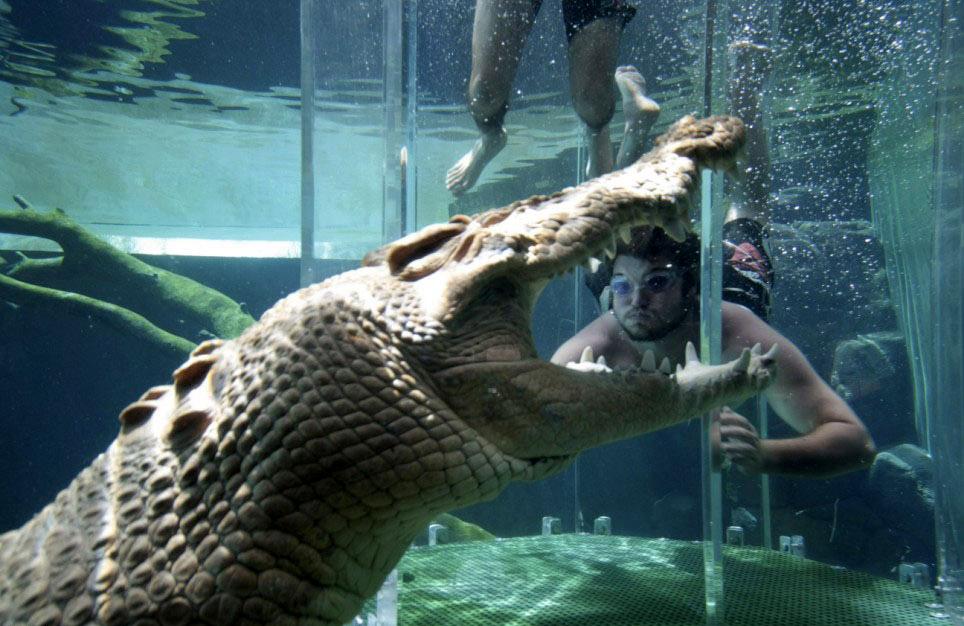 crocosaurus-cove--cage-of-death-15