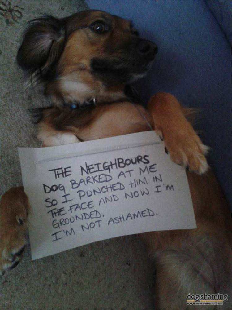 dog shaming 01 32 Hillarious Public Shaming of Dogs