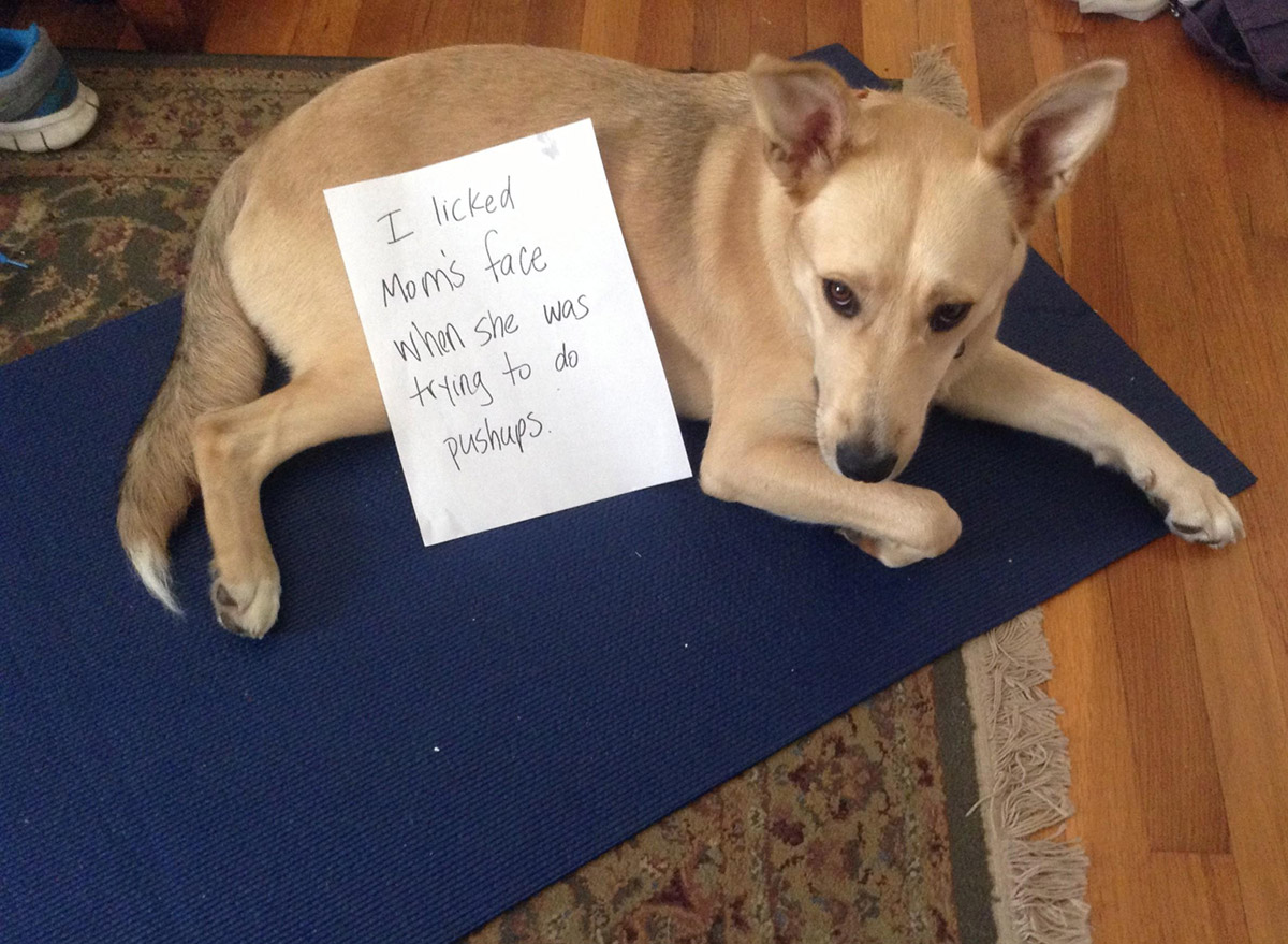 dog shaming 10 32 Hillarious Public Shaming of Dogs