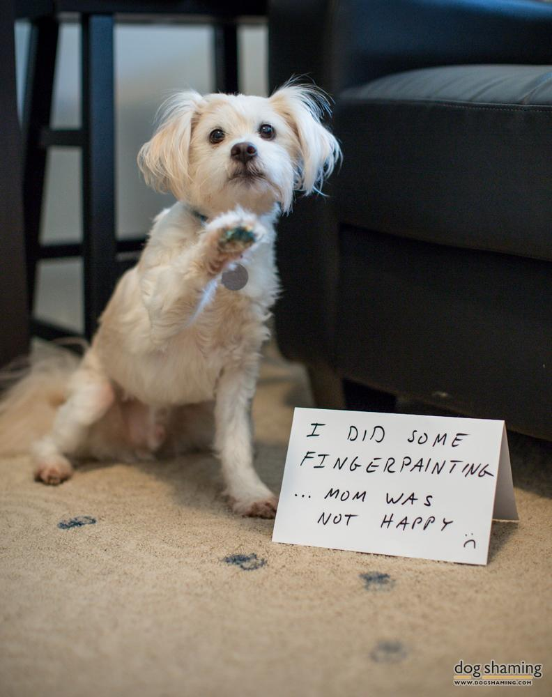 dog shaming 13 32 Hillarious Public Shaming of Dogs