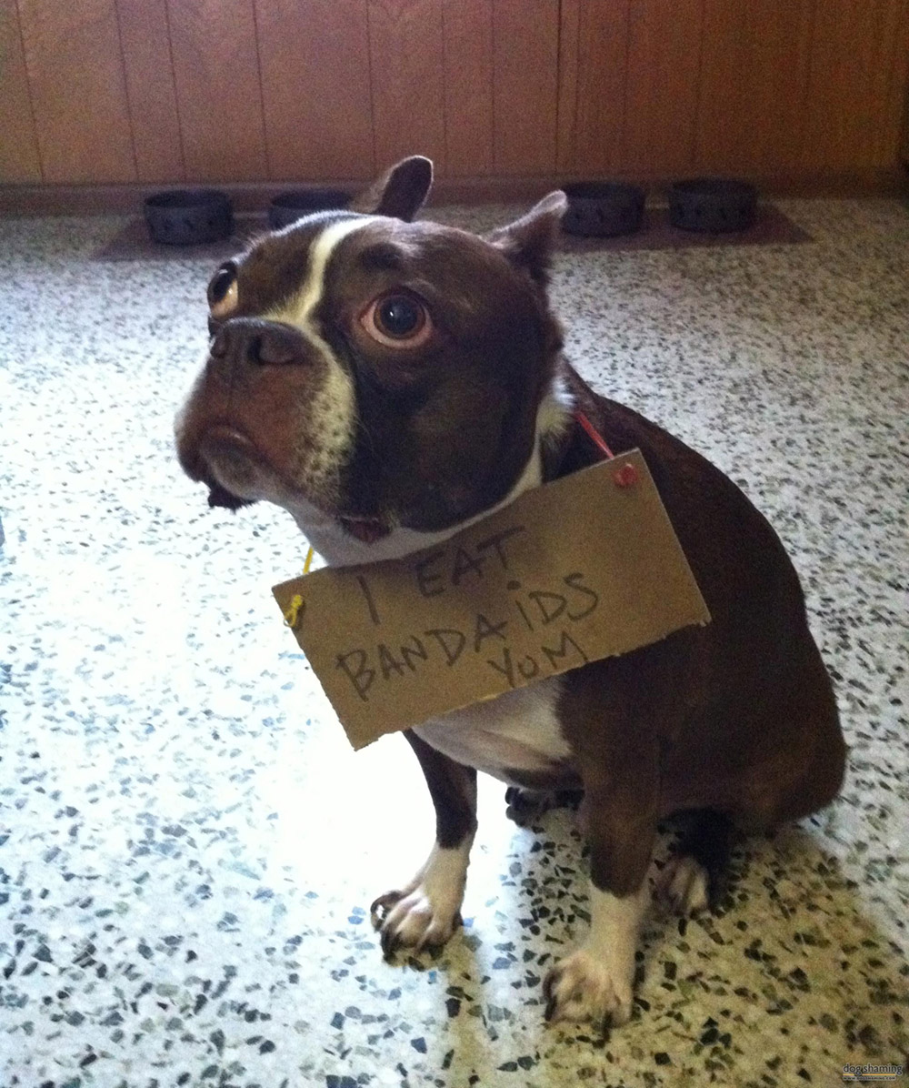 dog shaming 22 32 Hillarious Public Shaming of Dogs