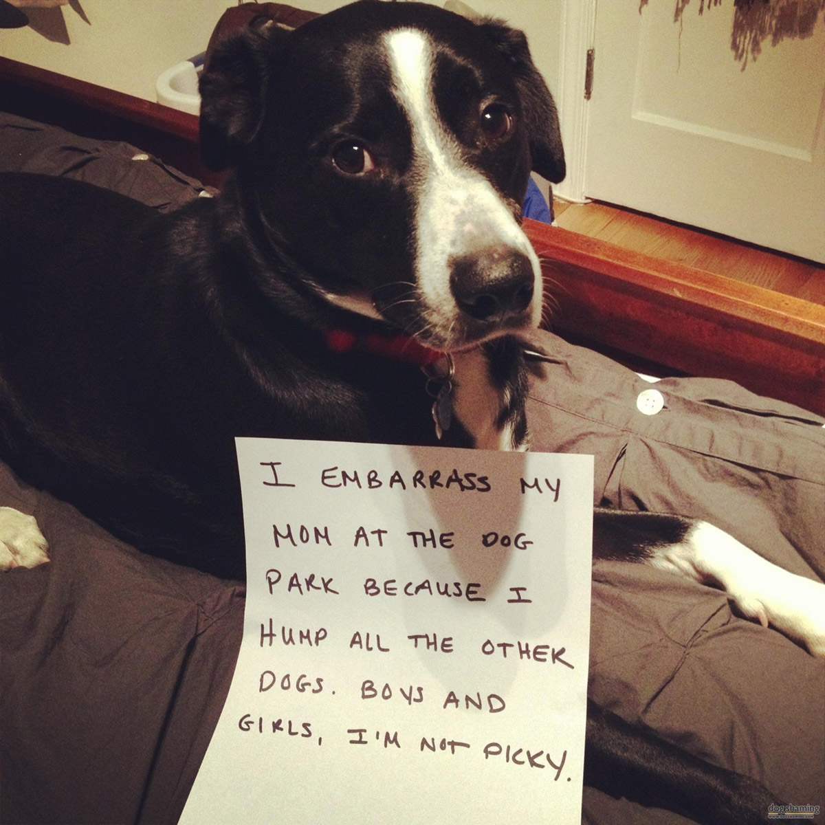 dog shaming 29 32 Hillarious Public Shaming of Dogs