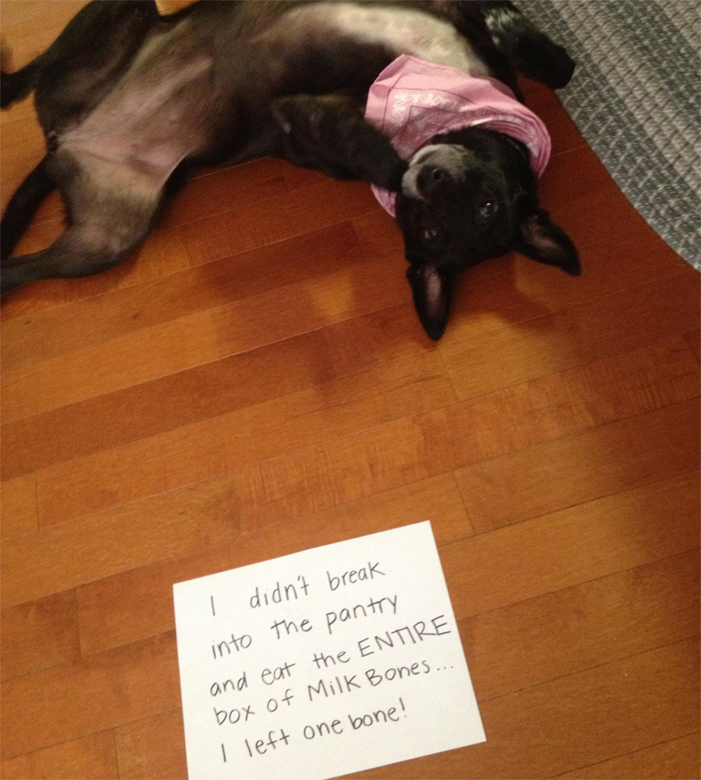 dog shaming 30 32 Hillarious Public Shaming of Dogs