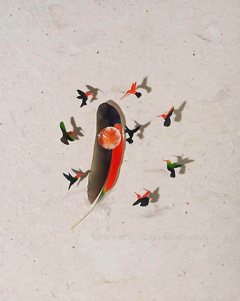 feather-artistry-chris-maynard-22