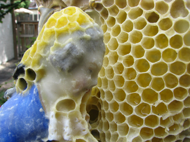 honeycomb-sculptures-aganetha-dyck-06