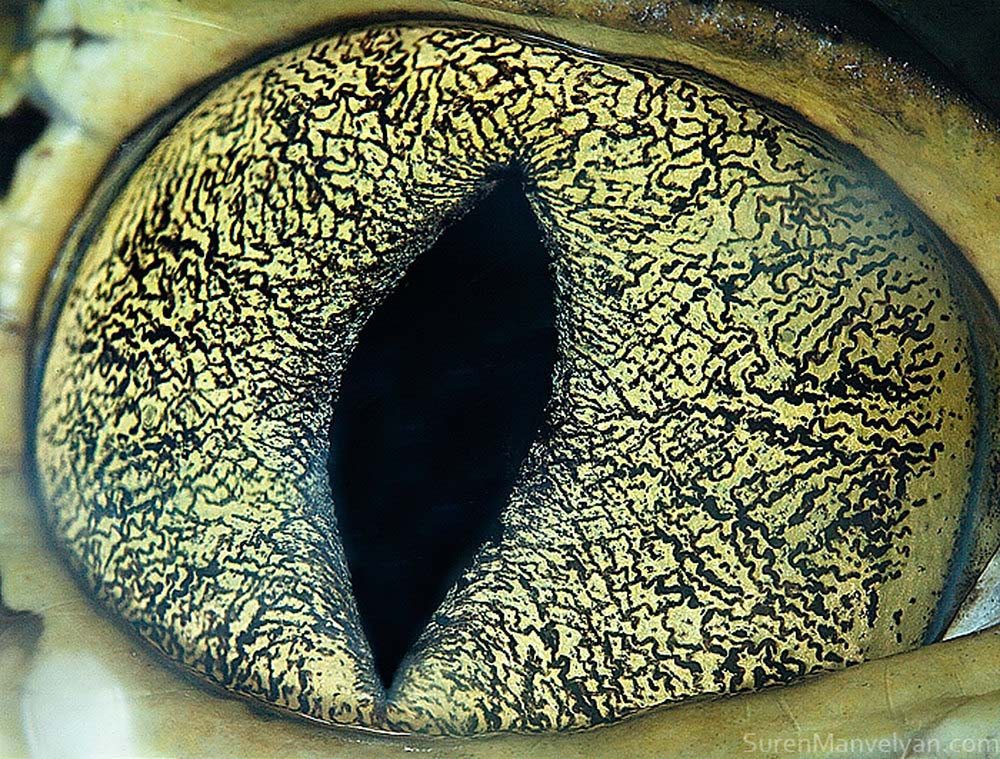 suren-manvelyan-animal-eyes-cayman