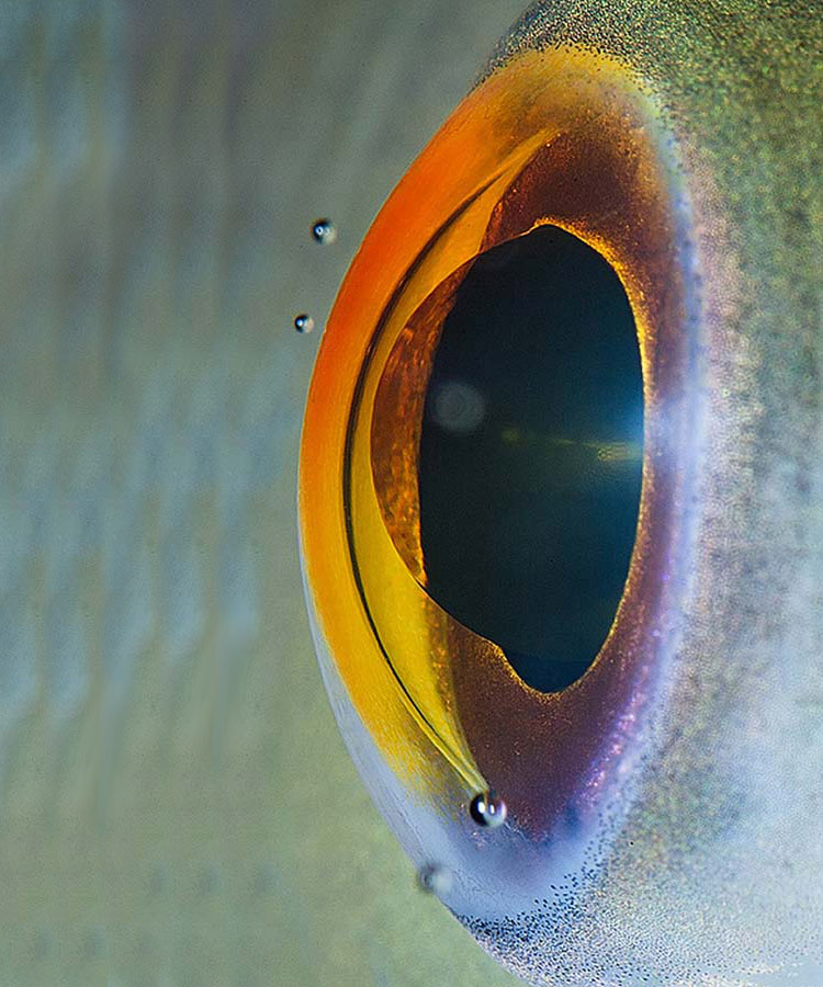 suren-manvelyan-animal-eyes-fish