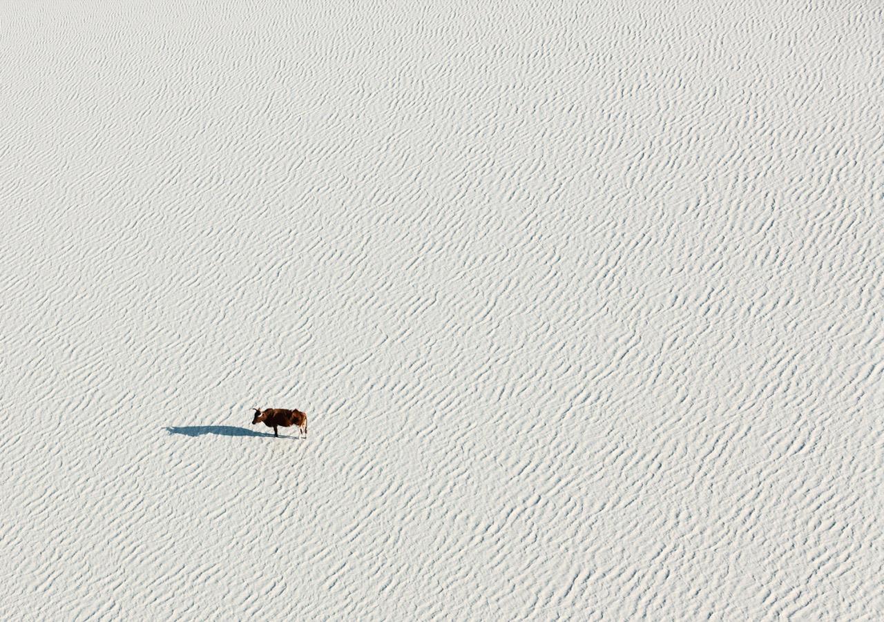 zack-seckler-botswana-wildlife-02