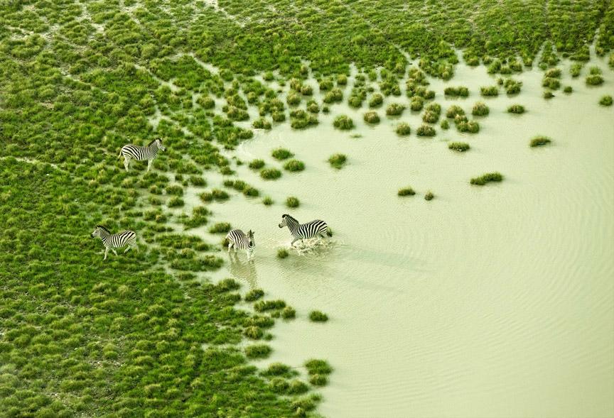 zack-seckler-botswana-wildlife-07