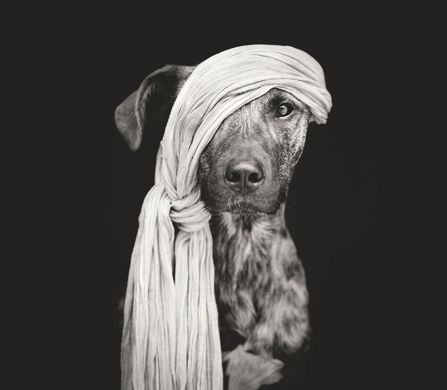 dogs-elke-volgelsang-02