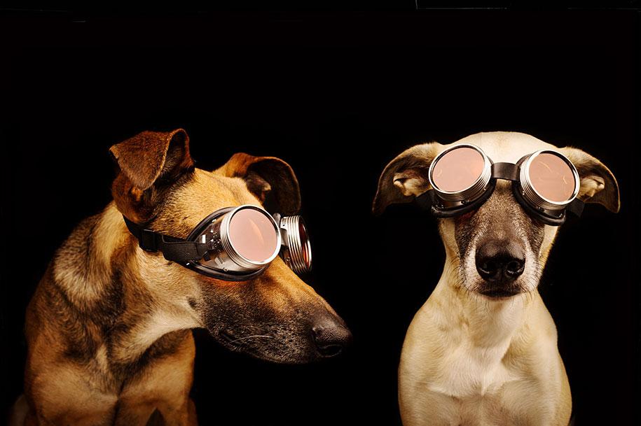 dogs-elke-volgelsang-03