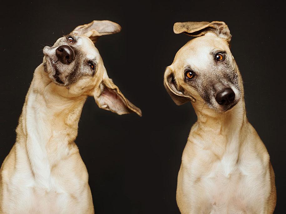 dogs-elke-volgelsang-07