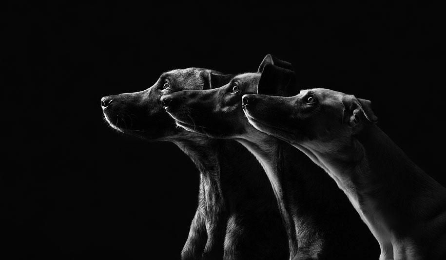 dogs-elke-volgelsang-08