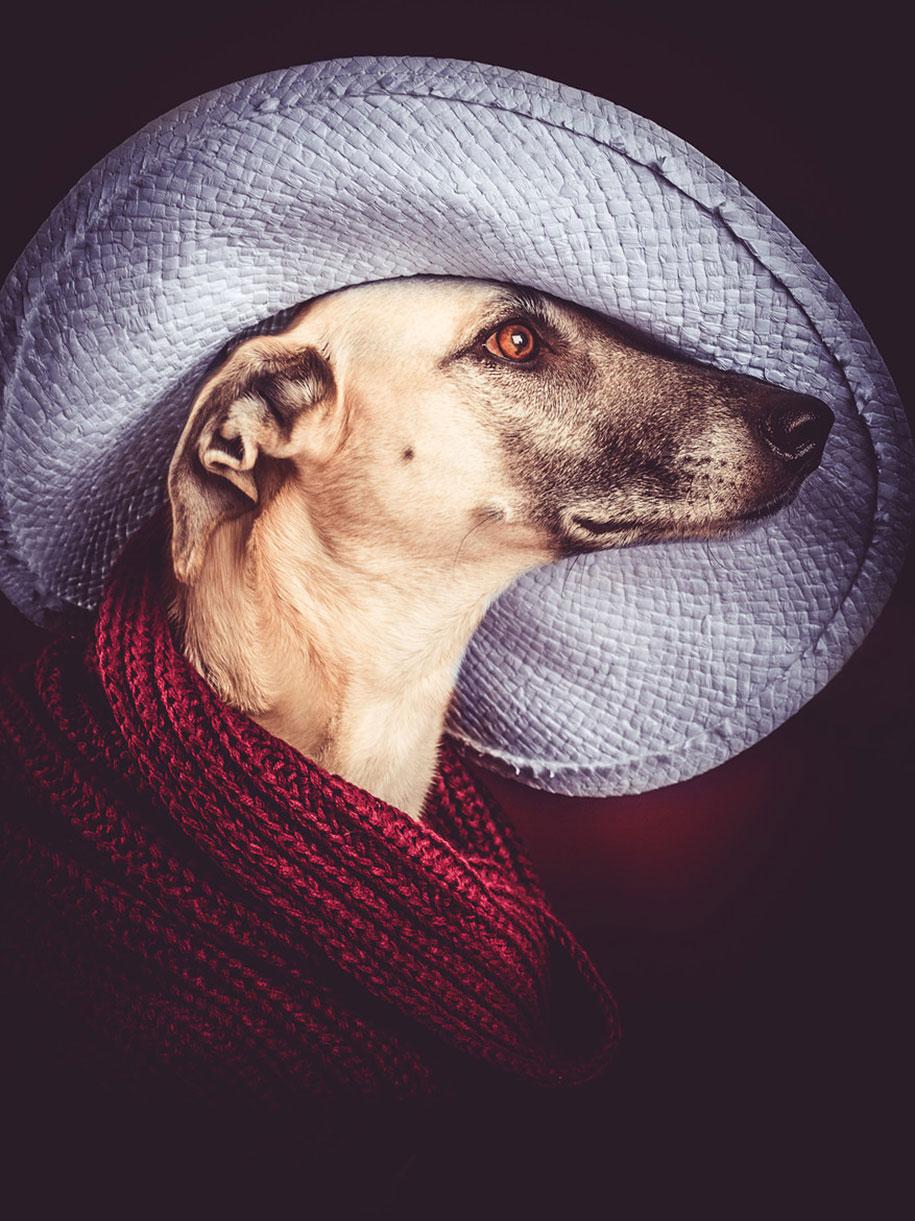 dogs-elke-volgelsang-10