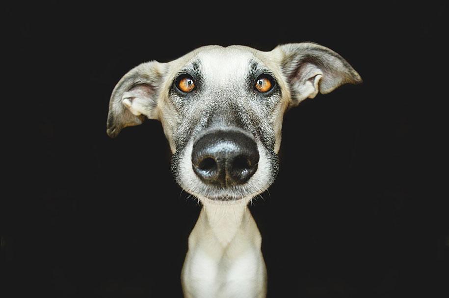 dogs-elke-volgelsang-11