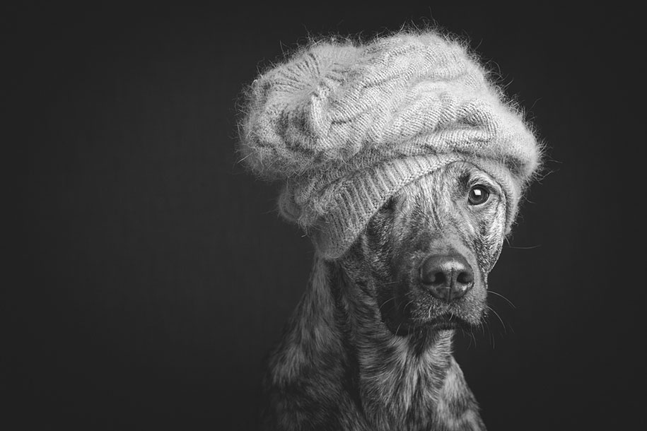 dogs-elke-volgelsang-17