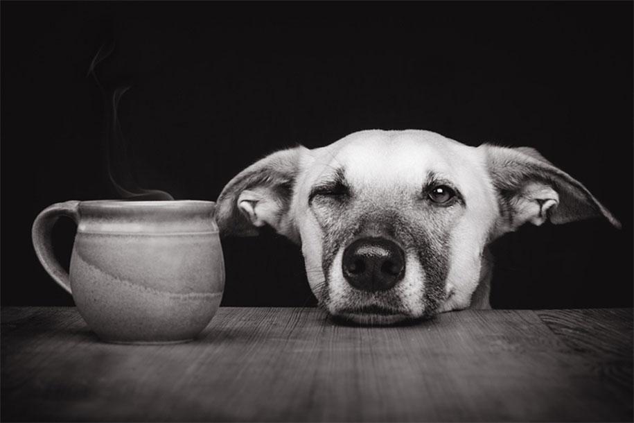 dogs-elke-volgelsang-18