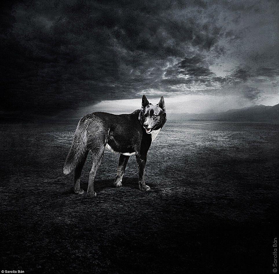 dogs-sarolta-ban-03