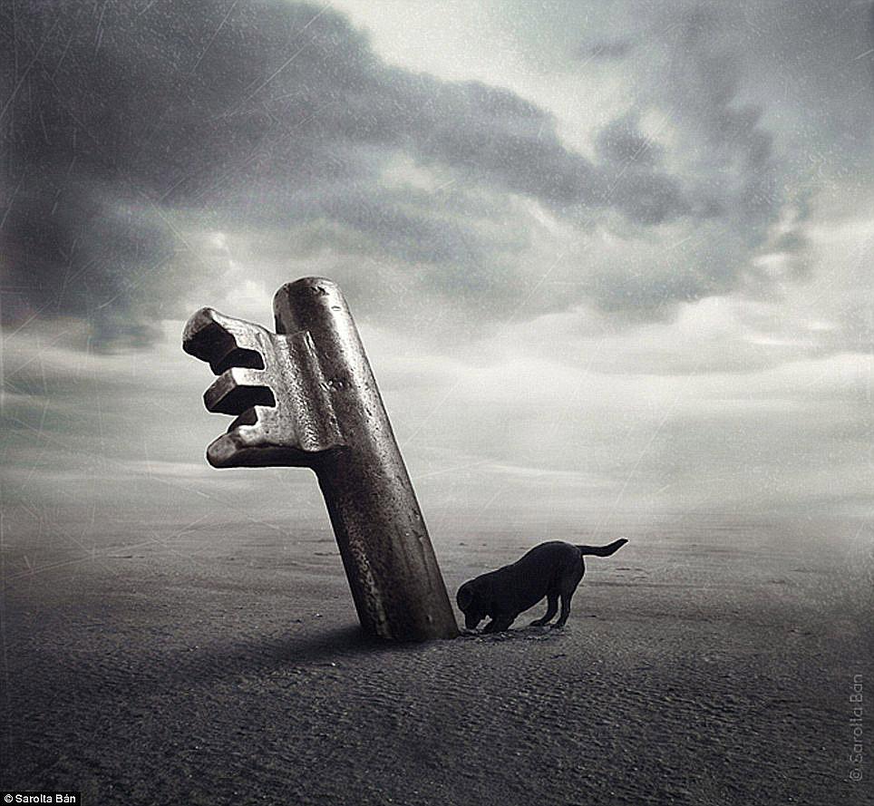 dogs-sarolta-ban-04