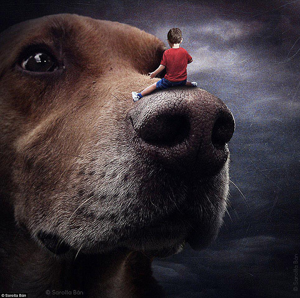 dogs-sarolta-ban-05