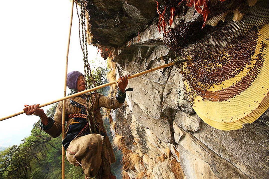 nepalese-honey-hunters-04