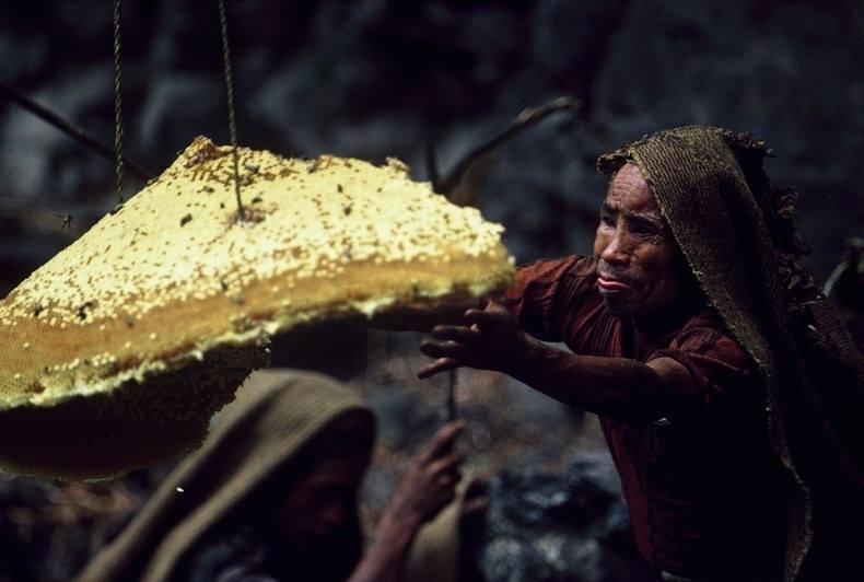 nepalese-honey-hunters-06
